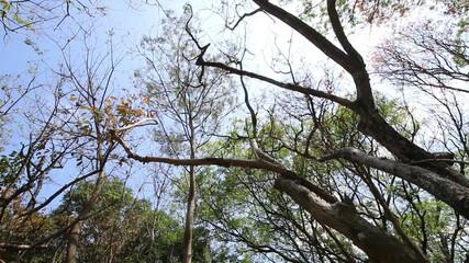 Nature tree on summer season , HD Video panning