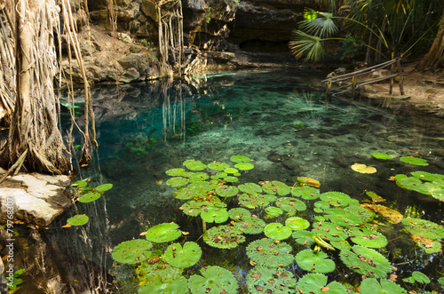 X-Batun Cenote - turquoise fresh water with water lilies and roc - 79768307