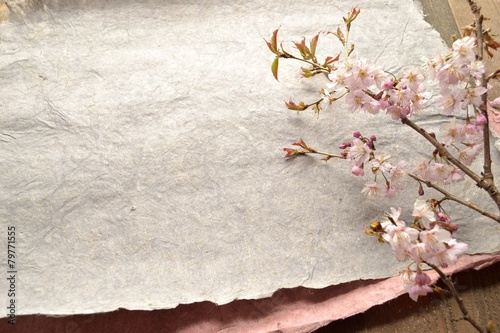 Fotobehang Kersen 桜の枝とグレーの紙