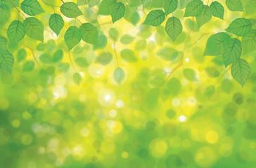 Vector birch's leaves on spring  bokeh background.