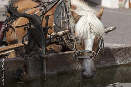 Leinwanddruck Bild Cavallo all'abbeveratoio