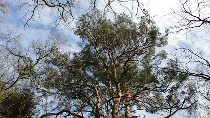 Wind in the treetops