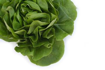 cespo di lattuga verde_ sfondo bianco