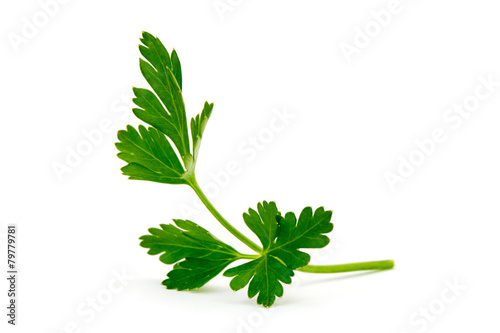 Tuinposter Kruiden green leaves of parsley isolated on white background