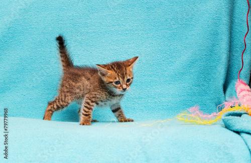 Deurstickers Luipaard cat Bengal Kitten.