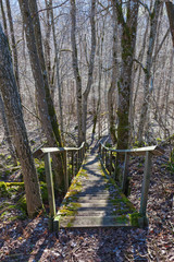 Walking path stair in the forest