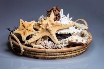 starfish original basket