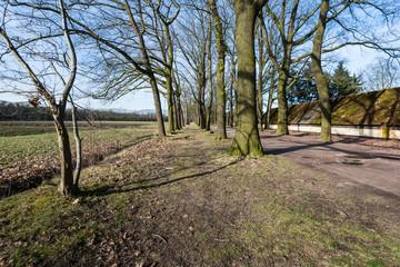 Rows of bare trees beside a field in wintertime
