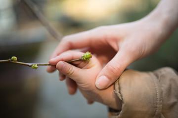 新芽を触る親子の手