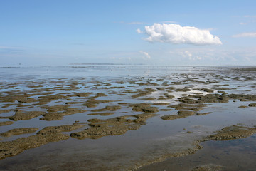 borders of the Wadden sea  in the north of Friesland(Holland)