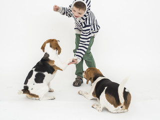 Boy training obedience to beagle dogs