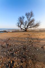 Albero solitario in spiaggia
