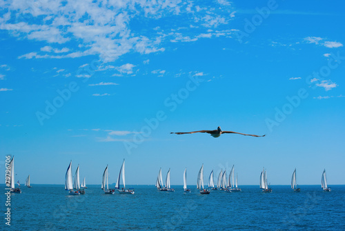 Sailboat race with flying pelican in foreground Poster
