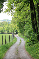 Kurviger Feldweg zwischen Wald und umzäuntem Feld
