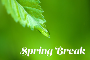 Spring break concept. Water drop on fresh green leaf, close up