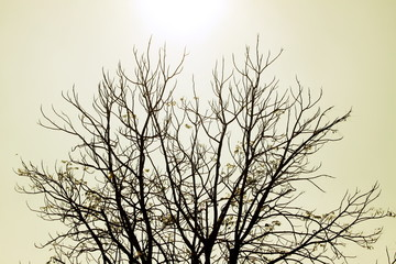 Trees dry winter of Thailand