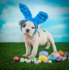 Silly Easter Bulldog Puppy