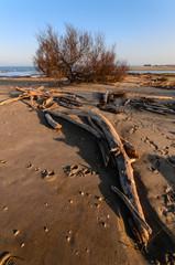 Tronco ed albero in spiaggia