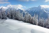 Winterwald mit den Alpen im Hintergrund