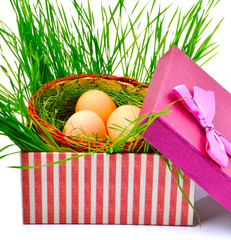Green nest with eggs in the gift box