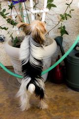 Puppy Climbing On Plant