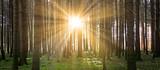 Fototapety Sonne im Wald