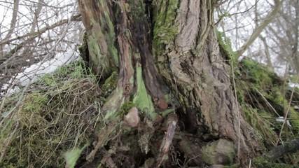 billet tree