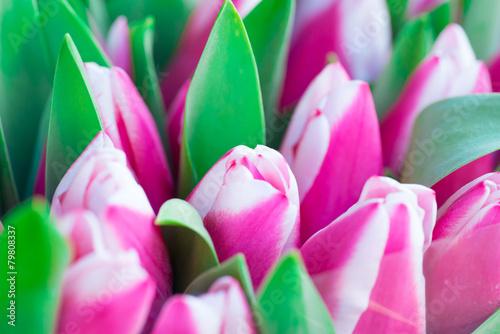 Plexiglas Roze Pink and white tulips