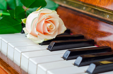 Pink rose on piano