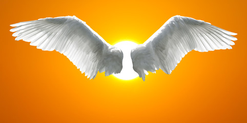 Angel wings with background made of sunset sky and sun
