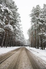 Road through frozen forest with snow