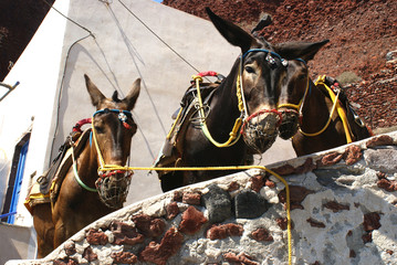 Donkeys, Greece