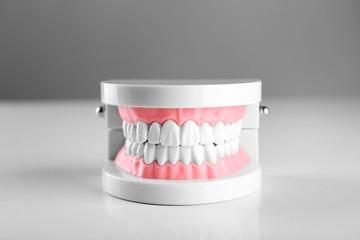 Plastic human teeth models isolated on white
