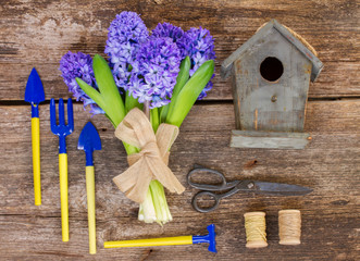 Blue hyacinth and gardening  set up