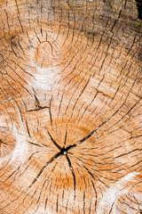 Jahresringe auf einem Baumstamm