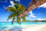 schräge Palme am Strand