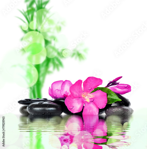 Flower and stones. Zen and Spa. - 79828963