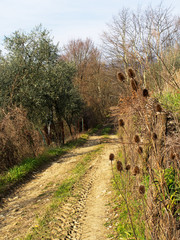 Spring morning - lane with teasel, sunshine