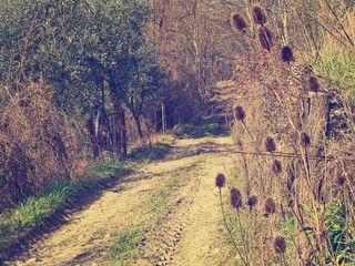 Spring morning - lane with teasel, sunshine. Retro filtered.