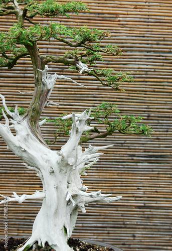 Plexiglas Bonsai Bonsai Tree