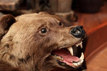 Head of stuffed bear