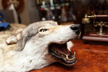 Head of stuffed wolf