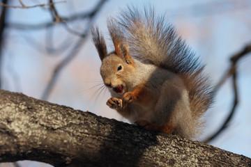 This nut ?.