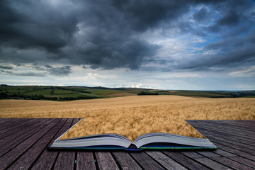 Stunning wheat field landscape under Summer stormy sunset sky co