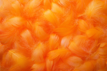 Soft and gentle theme with feathers