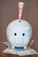 Piggy bank with Serbian banknotes