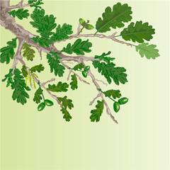 Oak branch spring background vector