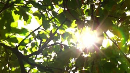 Sunlight Solar Power Through Green 8