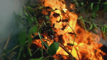 Fire burning leaves