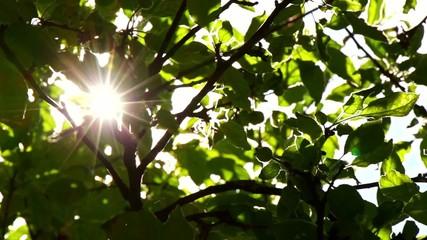 Sunlight Solar Power Through Green 9
